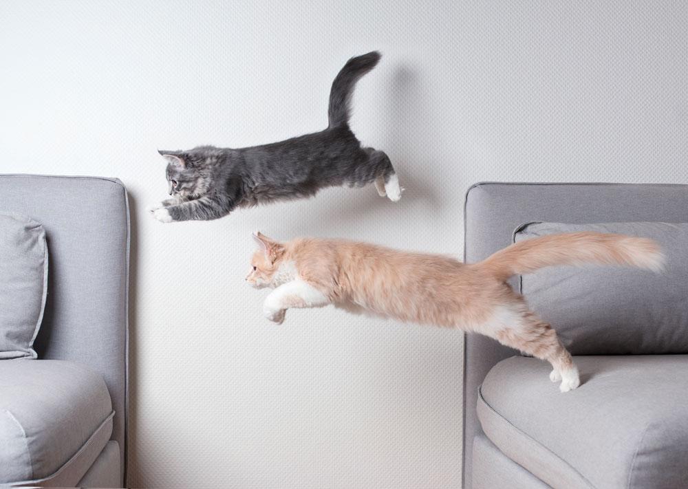 garde chat domicile